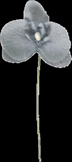 ORCHIDEE 5 x 10CM GRIS/6