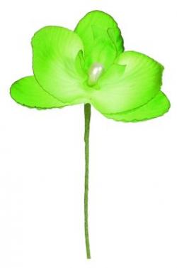 ORCHIDEE 5 x 10CM VERT/6*